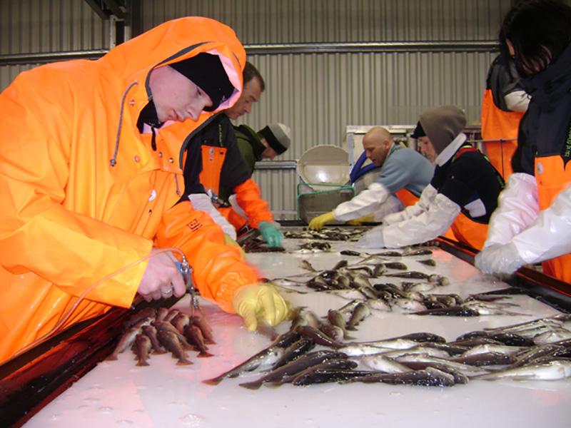 Brief Aqualife - Fish Vaccination System